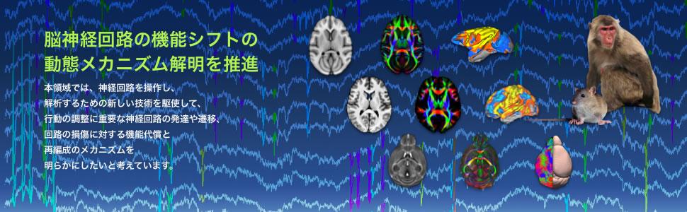 脳神経回路の機能シフトの動態メカニズム解明を推進|本領域では、神経回路を操作し、 解析するための新しい技術を駆使して、 行動の調整に重要な神経回路の発達や遷移、 回路の損傷に対する機能代謝と 再編成のメカニズムを 明らかにしたいと考えています。