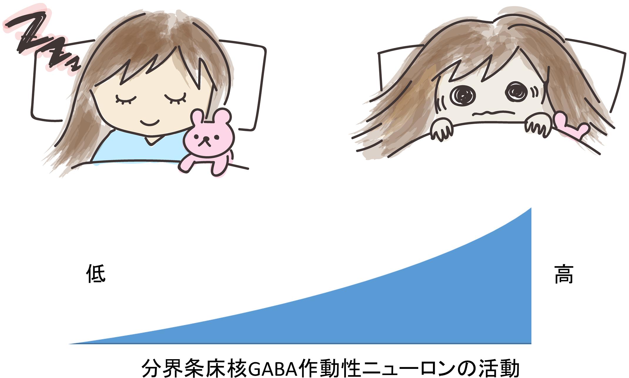 図2 不安に関与する分界条床核GABA作動性ニューロンの機能がたかまると不眠が生じる