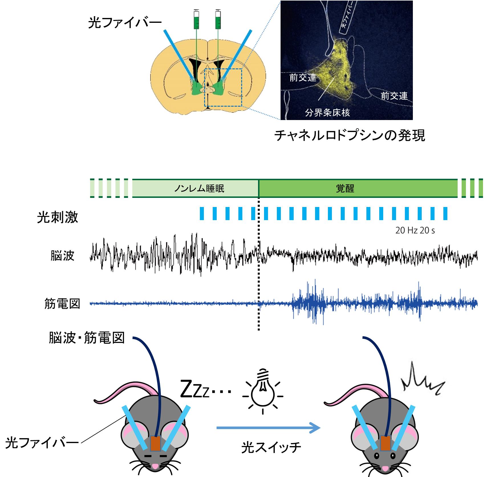 図1:今回の研究で使用された実験方法