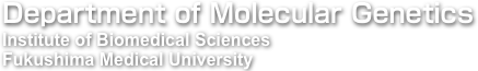 Department of Molecular Genetics, Institute of Biomedical Sciences, Fukushima Medical University
